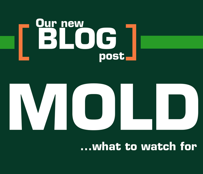 Mold Remediation Mold Facts: What to Watch Out For